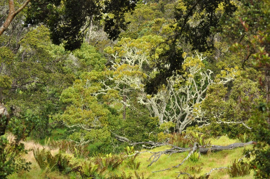 Tropical Dry Forests Of Hawaii And Their Birds Home